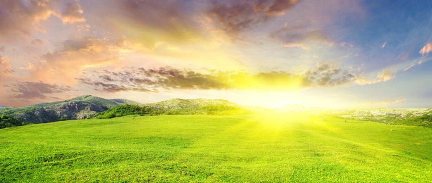 green grass and a sunset landscape
